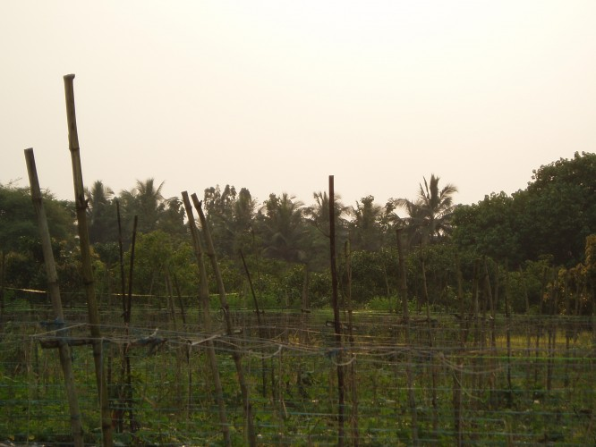 Agricultural India
