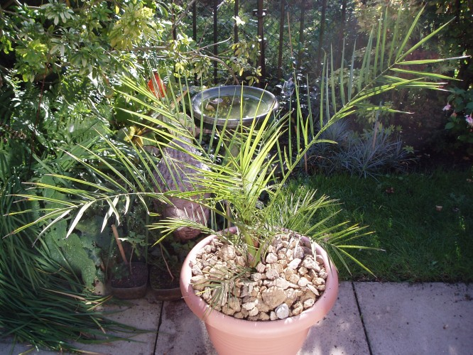 Re-potted the Palm
