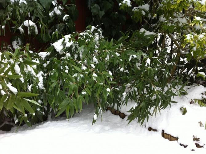 Beware Flattened Plants