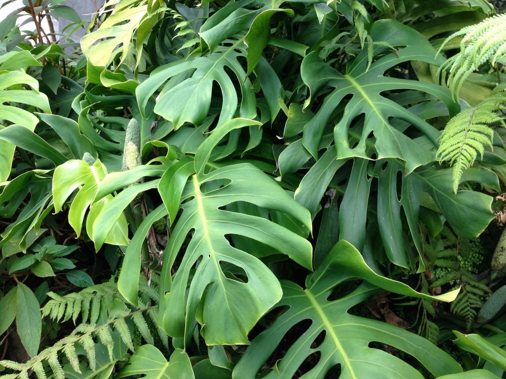 Tropical Plants Names Tropical Plant p