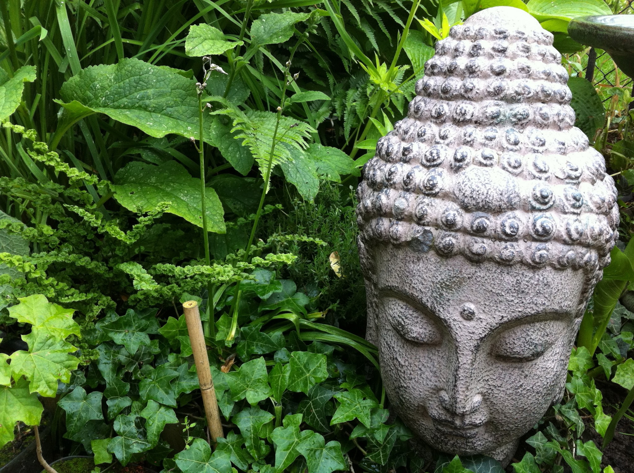 The Buddha Border Sunil S Garden