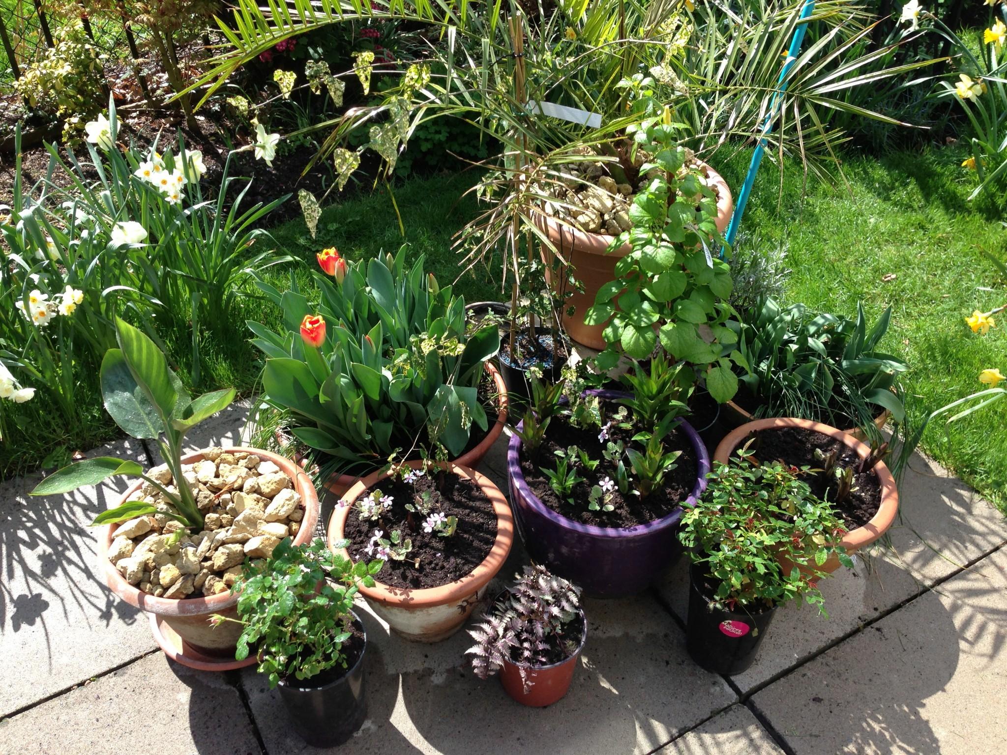 Patio Pots Sunils Garden