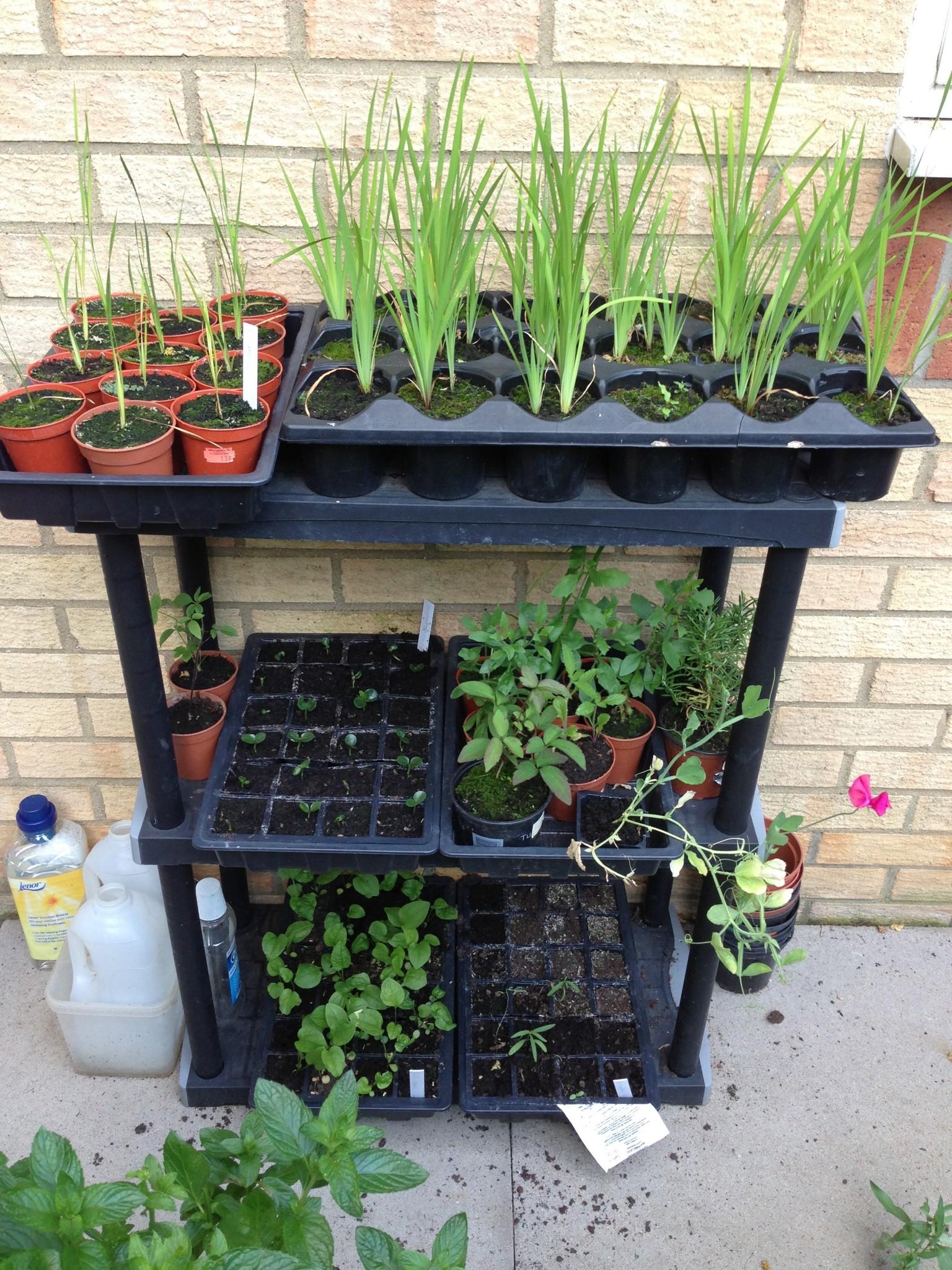 Long Term Seeds