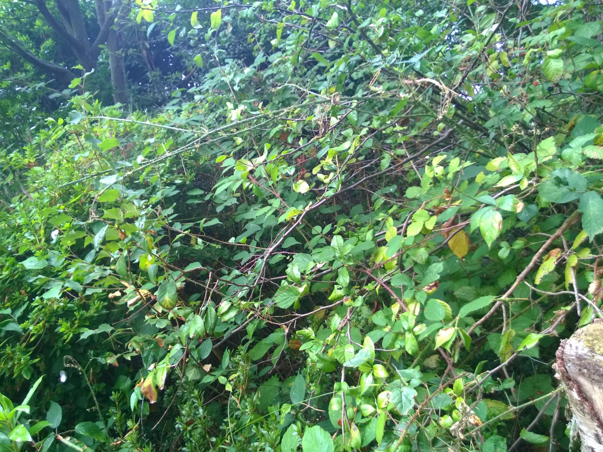 Wild Garden Patch