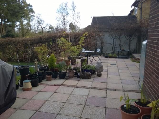 Patio Pot Plants 2015