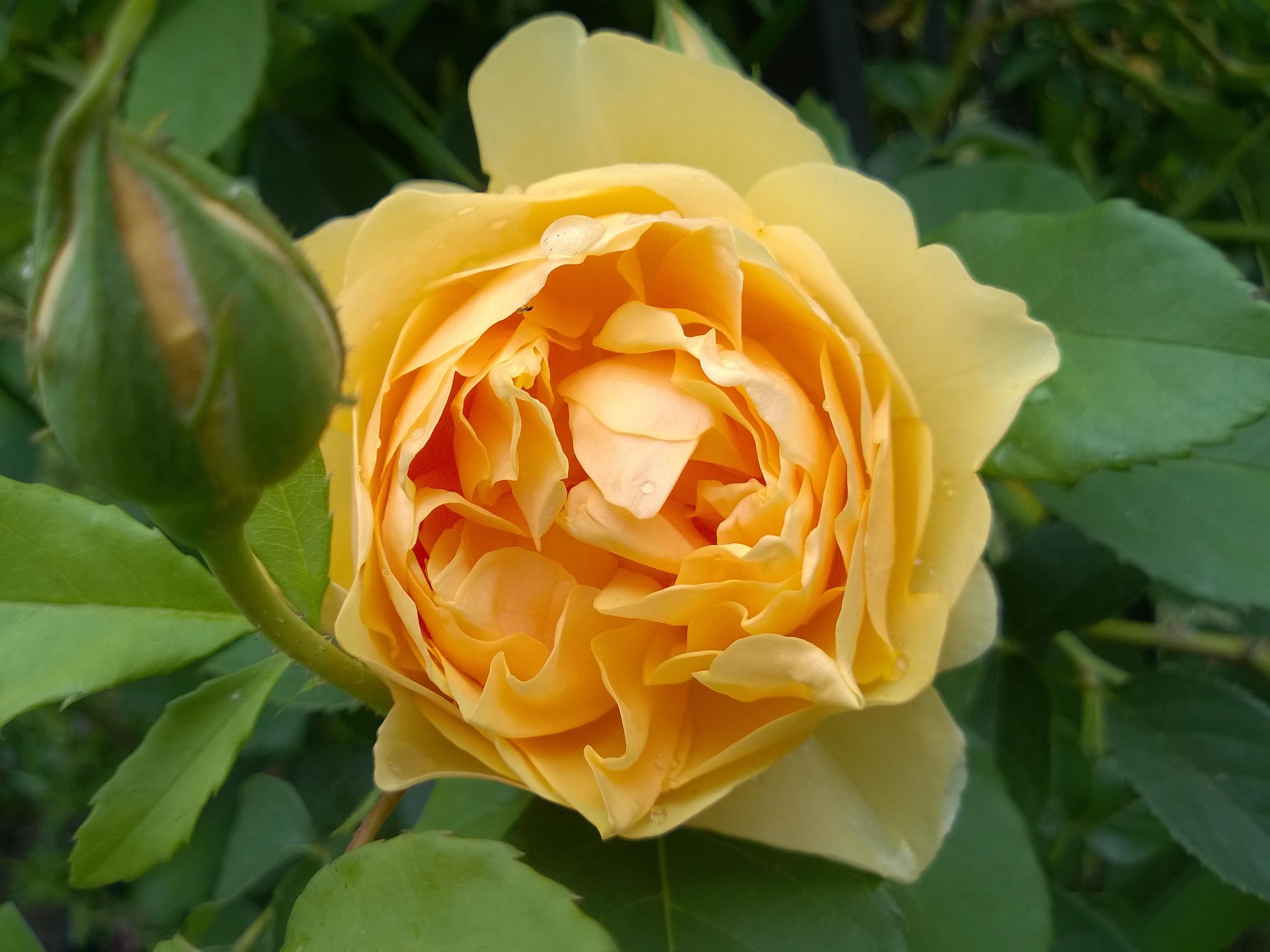 rosa graham thomas sunil 39 s garden. Black Bedroom Furniture Sets. Home Design Ideas