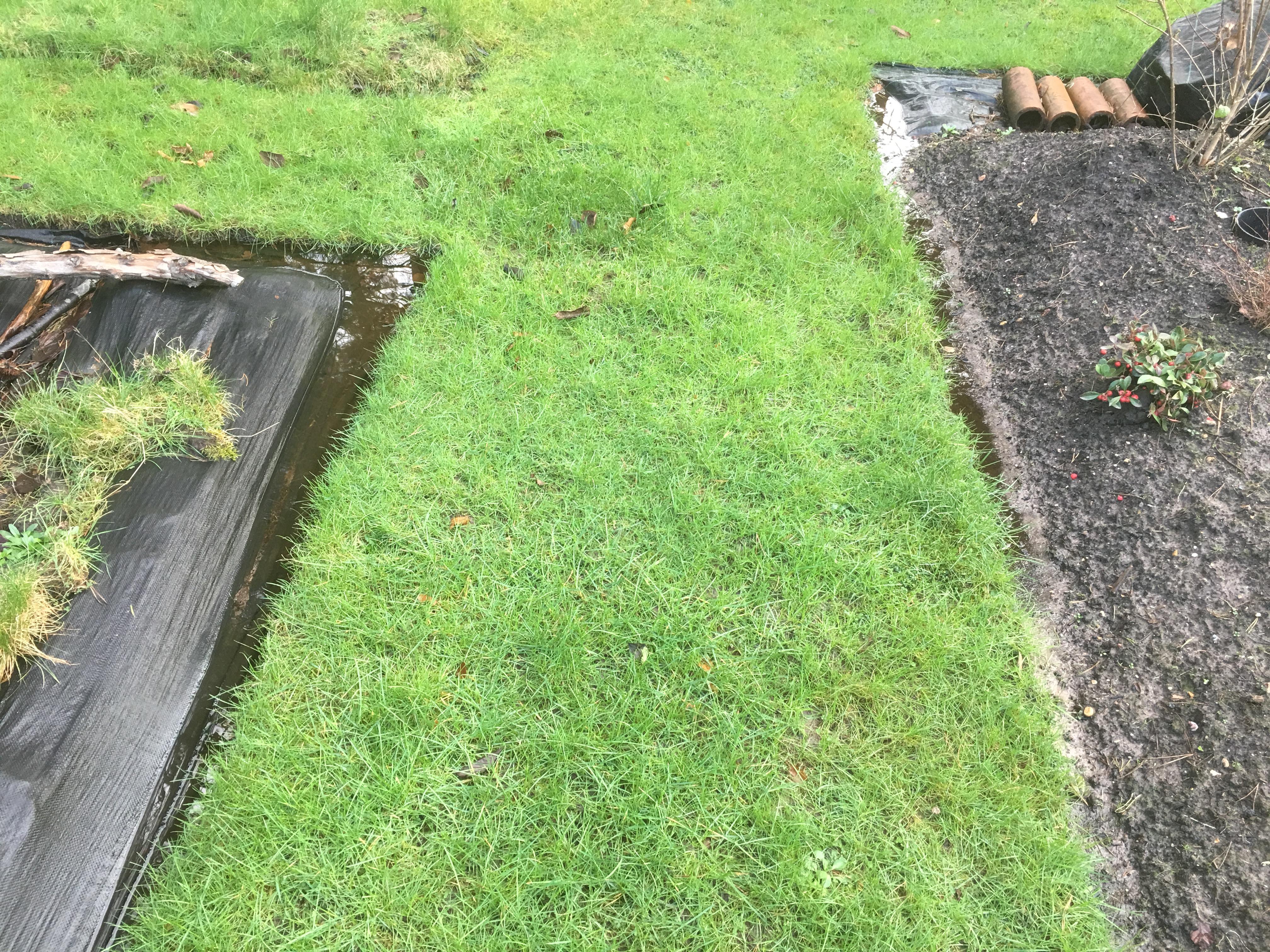 Soaking Wet Garden