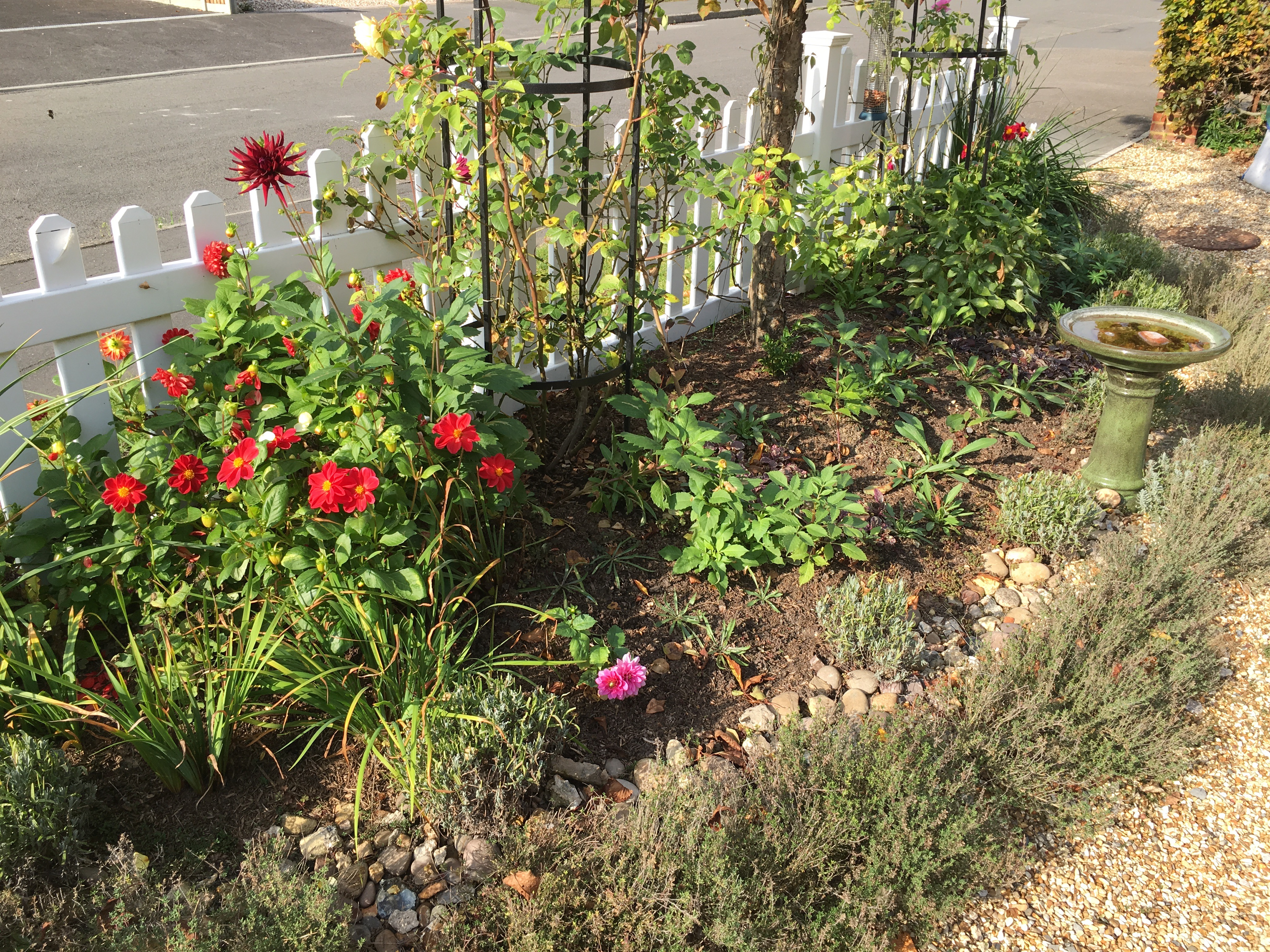 Front Border - Late Summer 2015
